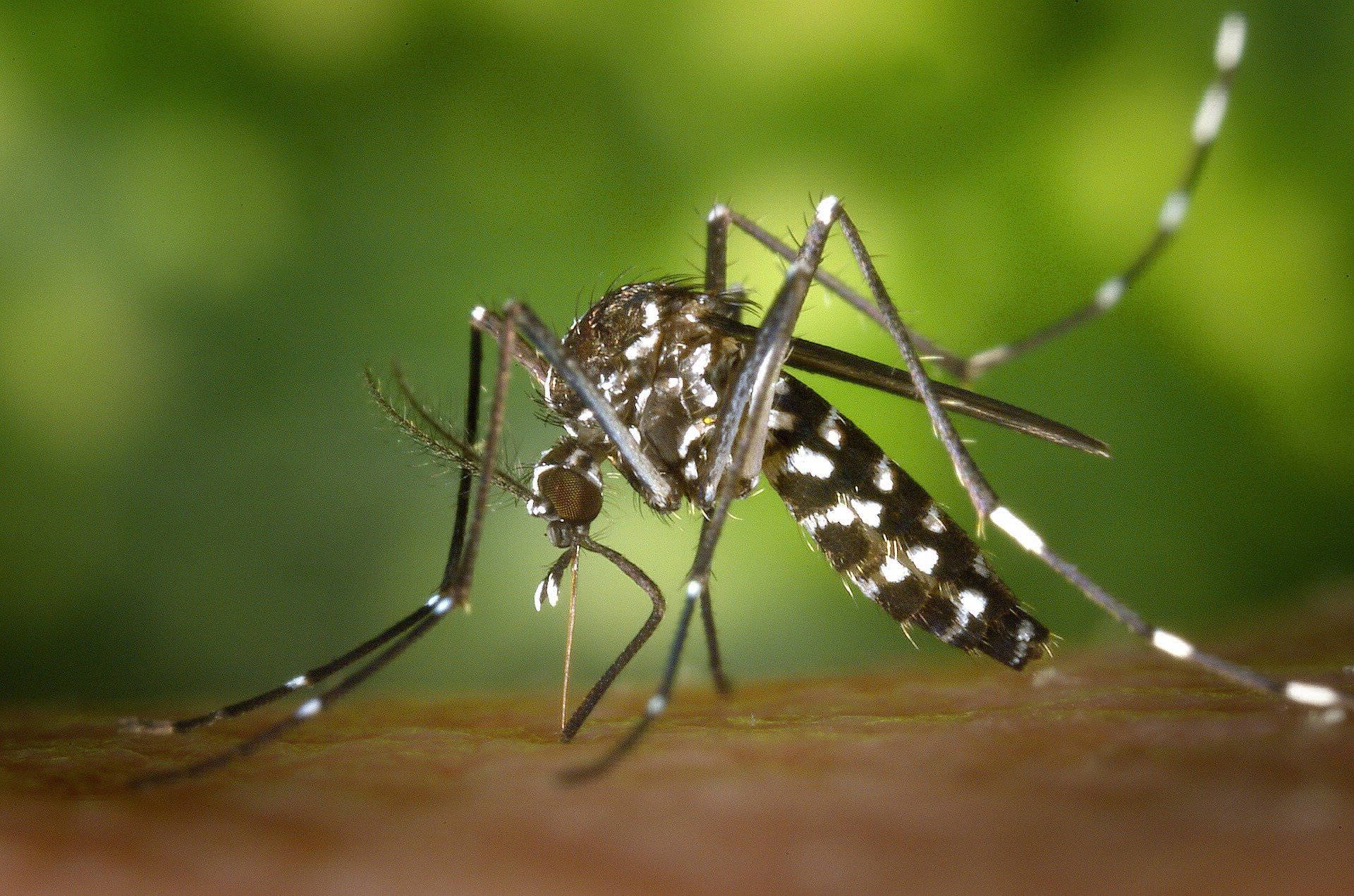 AEDES Mosquito, should be the mascot of all the quasi-government agencies we have to deal with